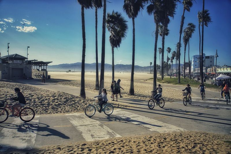 California dreaming Venice Beach Venice Bicycle Venice Beach Family Family Bicycle California Dreamin Water Tree Beach Sea Bicycle Sand Shadow Sky Horizon Over Water Bicycle Rack Idyllic Lifeguard Hut Shore Scenics Tranquility