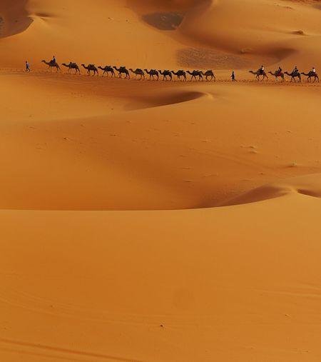 Scenic view of sand dunes at beach against orange sky