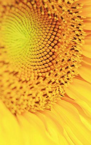 Born as summer flowers Light Flower