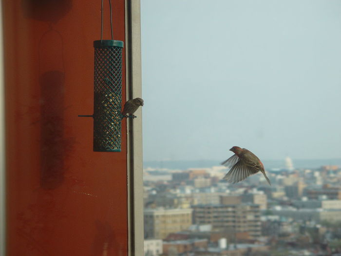 Birds Against Cityscape