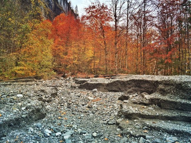 No water Landscape_photography Landscape_Collection Fall EyeEm Nature Lover EyeEmSwiss Streamzoofamily Trees