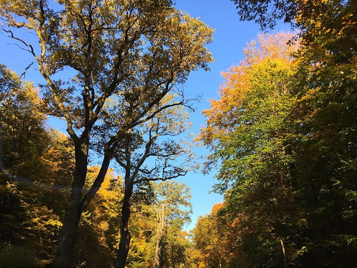 Tree Autumn Growth Low Angle View Nature Leaf Day Forest Branch Beauty In Nature Change Outdoors No People Sunlight Sky Tranquility Scenics