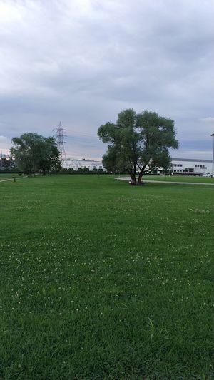 Tree Golf Course Golf Water Golf Club Lush - Description Green - Golf Course Field Soccer Field Sky