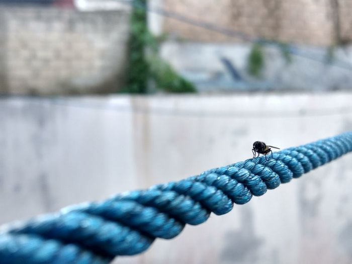 Close-up of human hand on rope