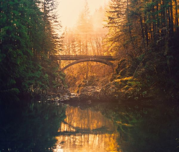 Camping Hike Explore Nature Photography Adventure Tree Plant Water Nature Bridge Sunset Beauty In Nature Sunlight Arch Bridge Growth Outdoors Scenics - Nature Connection Bridge - Man Made Structure Tranquility Architecture Reflection River