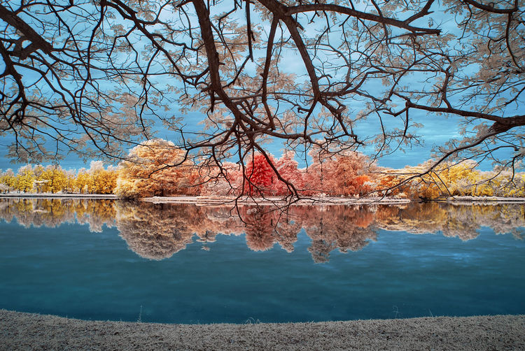 An infrared view of a lakeside with colorful foliage trees. Infrared White Foliage Abstract Arts Autumn Beauty In Nature Branch Color Infrared Day Infrared Photography Lake Landscape Nature No People Outdoors Red Reflection Scenics Sky Tranquil Scene Tranquility Tree Water Yellow Foliage