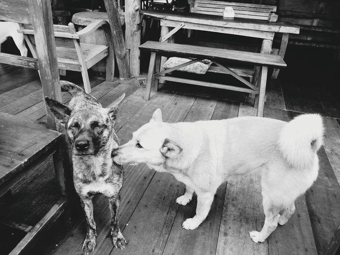 dogs. Animal Themes Dog Nature Chiang Mai | Thailand Enjoying Life Hello World Sea View No People Pets The Portraitist - 2017 EyeEm Awards