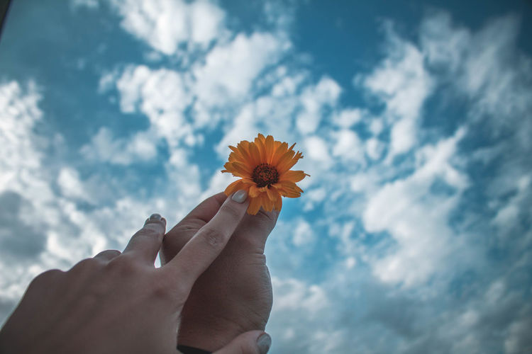 Cropped hands of couple holding flower against cloudy sky