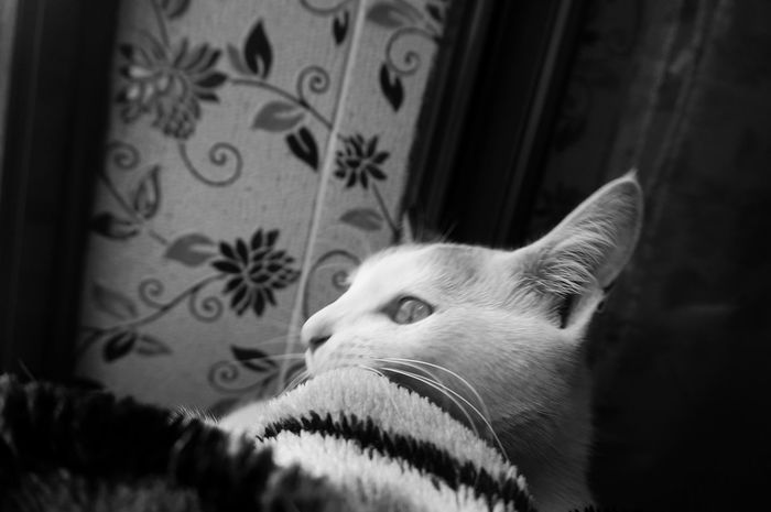 Yupe. Today was a good day 😪 Napping from 9 To 5 😂😂😂 Blackandwhite Monochrome Mobilephotography Shades Of Grey Shades Of Black Black Vs White Contrast Cat Cats Cat Lovers Cat Lover Beautiful Beauty Love Sitting By The Windo Napping Cat Sleepy Lazy Shootermag AMPt_community Vscocam VSCO Snapshots Of Life