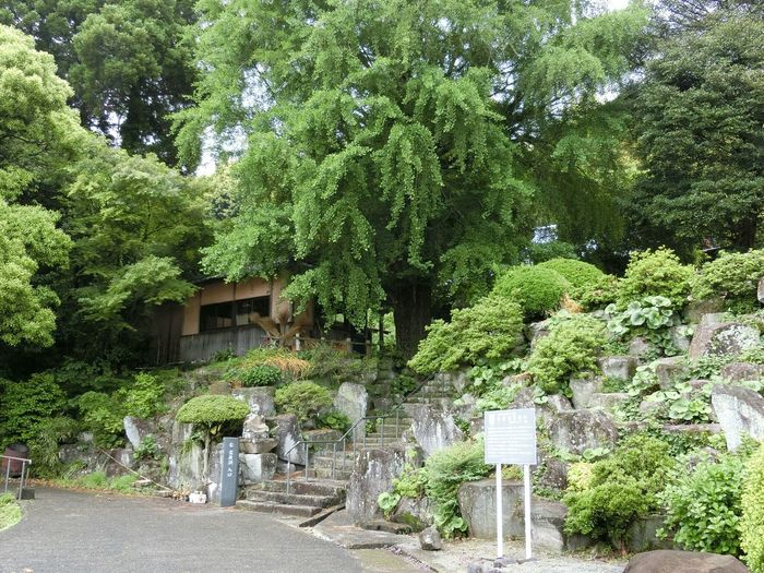 禅 Zen Japanese Temple Nature EyeEm Nature Lover EyeEm Mountain Lover