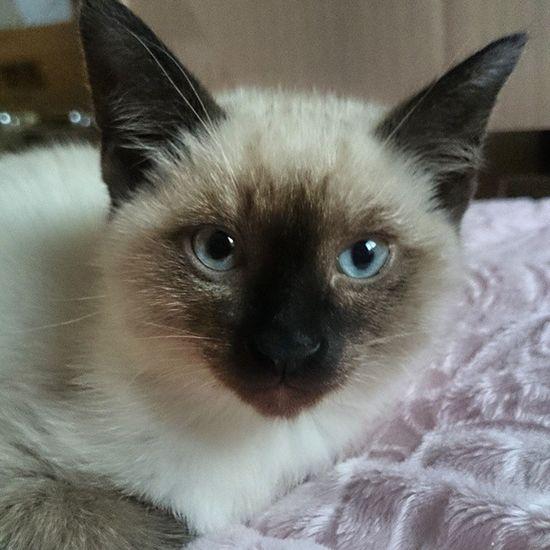 . . . 동그란 얼굴 불꽃눈빛 ㅡㅡㅡㅡㅡㅡㅡㅡㅡㅡㅡㅡㅡㅡㅡ 오늘하루도 날씨가 너무 좋은데 방콕이네요 흑흑 ㅠㅠ 다들 즐거운 주말 보내시는지요?? . . . 일상 고양이 고냥이 냥 냥이 냥스타그램 고양이그램 고냥이그램 cat cute