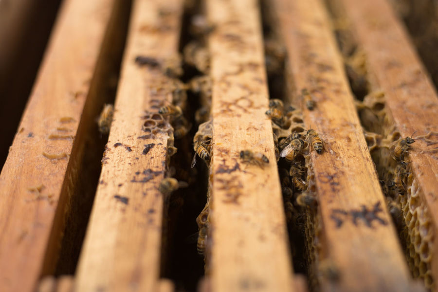 Open hive detail. Beekeeping, agriculture, rural life. Agriculture Beekeeping Carpentry Close Up Close-up Day Honey Indoors  Insect Life Nature No People Open Rual Wood - Material