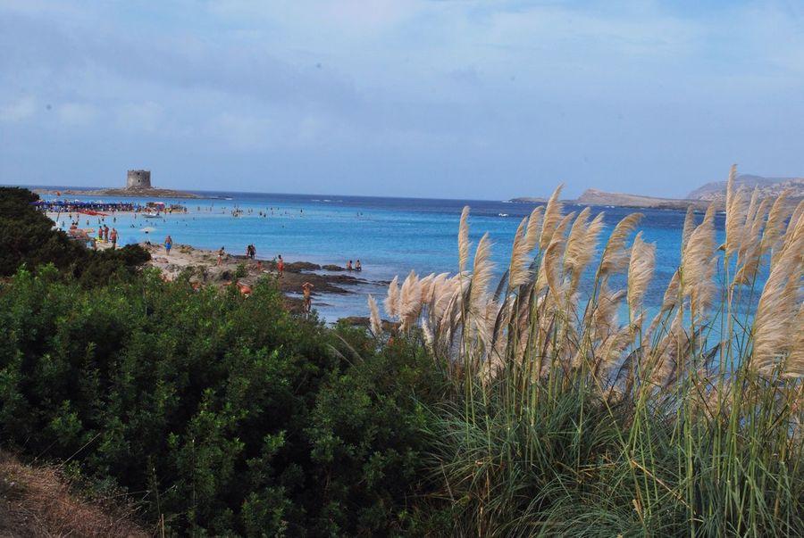 La pelosa, Stintino Stintino Pelosa Sardegna Spiaggeparadisiache Sardinia,italy Beach View Bestbeach Landscapes With WhiteWall The Great Outdoors - 2016 EyeEm Awards The Essence Of Summer