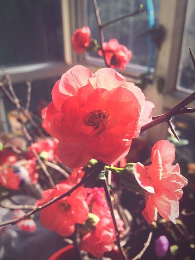 Showcase: February Cny Chinese New Year Chinese Tradition Cherry Blossoms Chinese New Year Flowers Flowers Home Is Where The Art Is