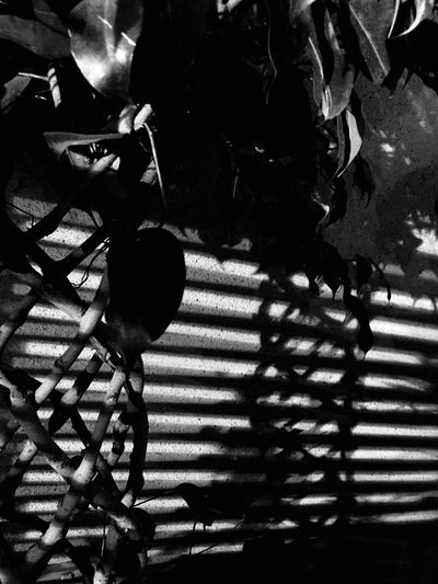 Shadows Shadow High Angle View Real People Day Outdoors Men Low Section People Plant Shadows & Lights Black And White Blackandwhite
