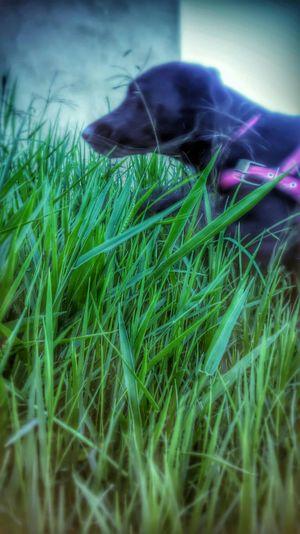 Hanna Brazil Fimdetarde Green Cute Pets My Dog