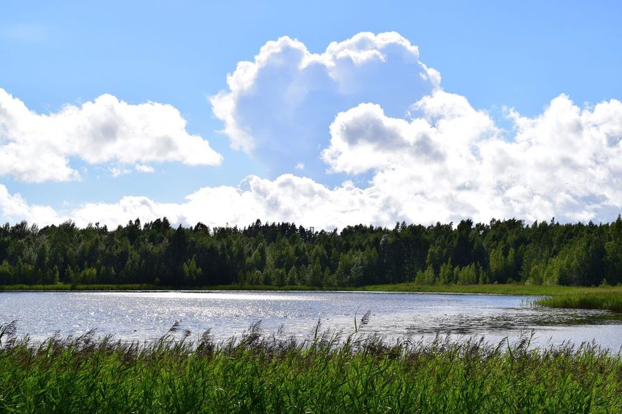 Beauty In Nature Outdoors No People Day Nature Tree Finland Nikon D5300 一眼 Camera Love