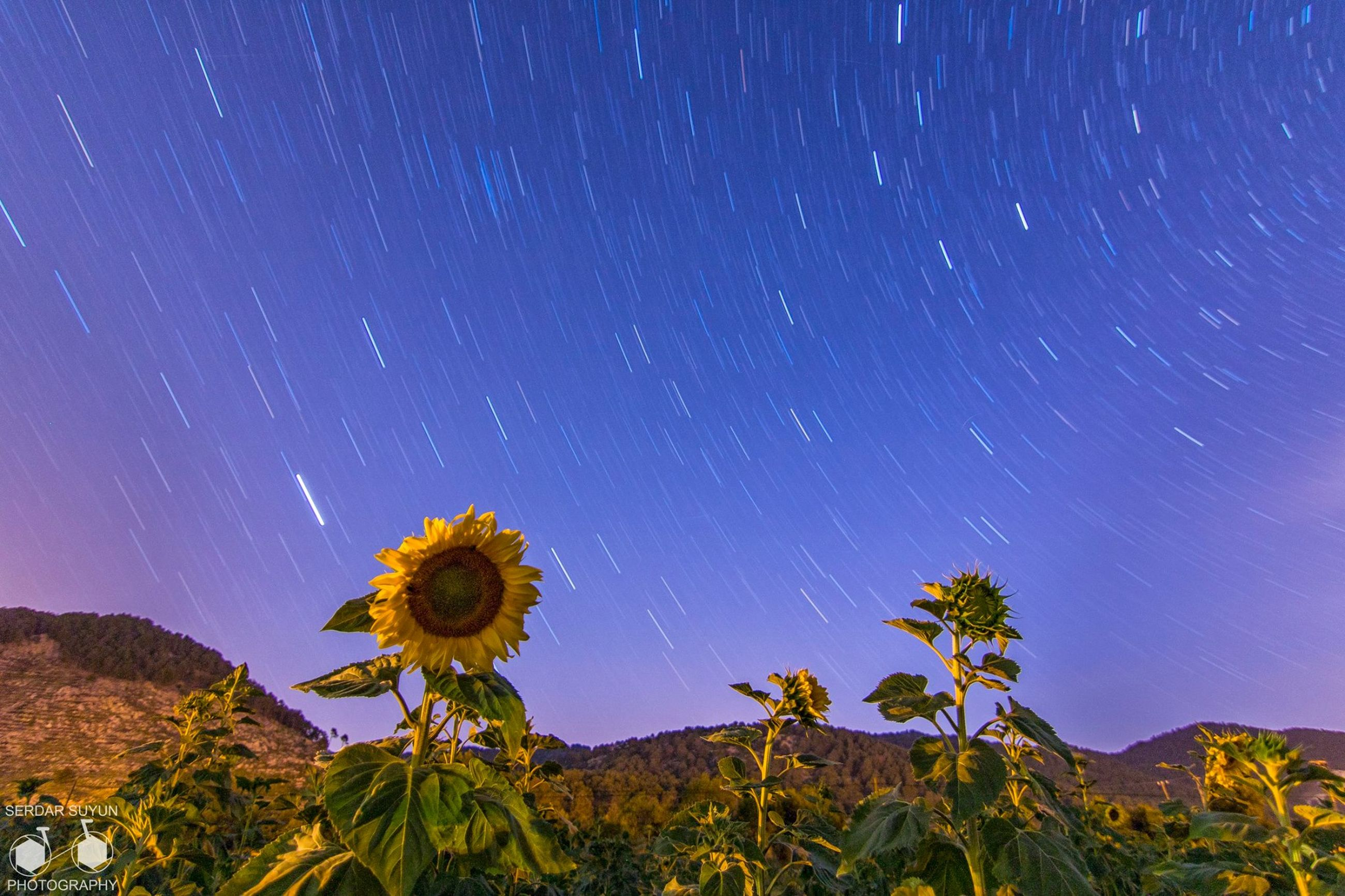 scenics, beauty in nature, tranquil scene, star - space, low angle view, astronomy, blue, tranquility, nature, night, majestic, cliff, flower, star trail, mountain, star field, sky, outdoors, non-urban scene, space, space exploration, in bloom, no people