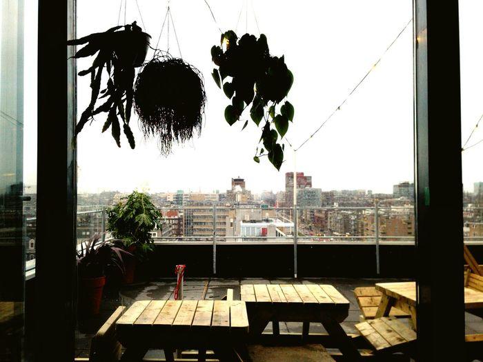Great Views Indoor Plants Roof Terrace