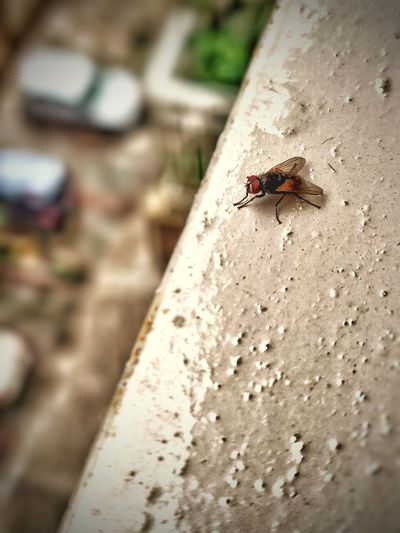 Close-up of fly on wall