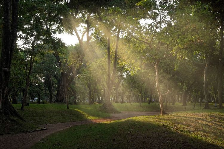 Sunrays Monas National Monument Plant Tree Land Nature Beauty In Nature Environment Growth Sunbeam Outdoors Tranquil Scene Tranquility Grass Scenics - Nature Field Day No People Green Color Landscape Sunlight Capture Tomorrow
