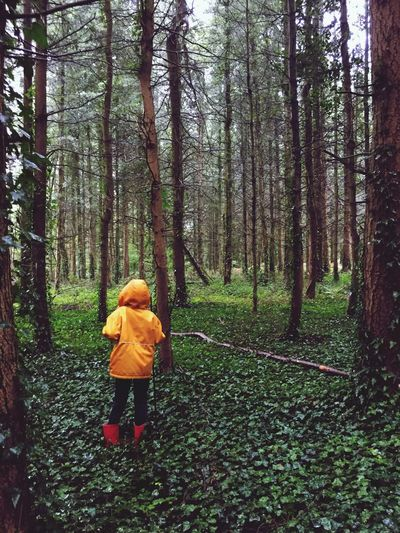 Lost Tree Land Forest Plant Real People One Person Leisure Activity Childhood Child WoodLand Nature Outdoors