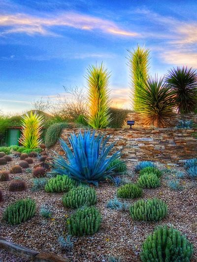 Desert Landscape Plant Growth Sky Cloud - Sky Cactus Nature No People Outdoors Artiseverywhere Day Palm Tree Scenics Blue Tree Landscape Grass Agave Plant Desert Landscapes Xeroscape Glass Art Glass Agave