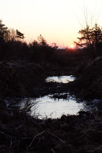 Adventurelands Photography Explorers Connect Frozen New Forest National Park Wintertime Beauty In Nature Clear Sky Cold Temperature Day Frozen Puddle Grass Landscape Nature No People Outdoors Scenics Silhouette Sky Sunrise Tranquil Scene Tranquility Tree Water Winter