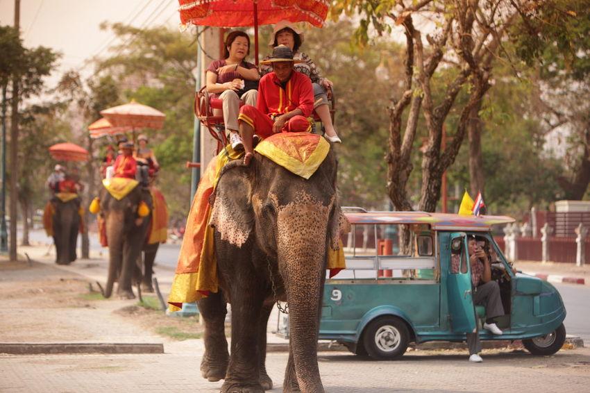 ASIA Ayuthaya Ayutthaya Landmark Southeastasia Temple Thailand Travel Traveling Water
