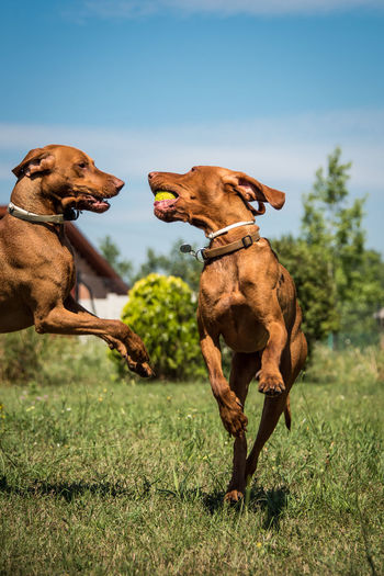 Dogs playing on field against sky