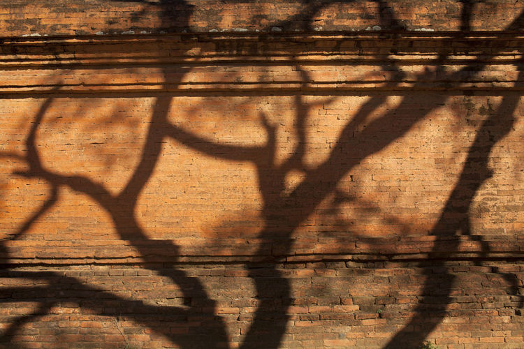 Close-up of shadow on wood