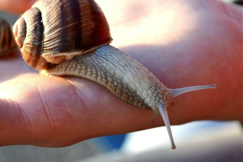 Close-up of snail on finger