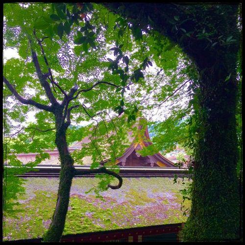 太宰府天満宮 Dazaifutenmangu Rainy Days Praying Green TreePorn Thatched Roof Sharin Fukuoka,Japan IPhoneography