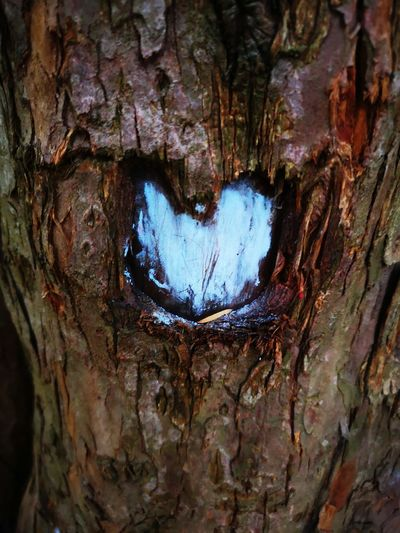 Must be love... Eyeem Lovers Lovely Sign Heart ♥ Tree Tree Trunk Backgrounds Full Frame Textured  Bark Rough Close-up