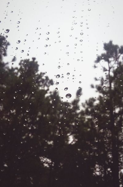 Rain Rainy Days RainDrop Raindrops Raindrops On My Window Trees In The Distance Grainy