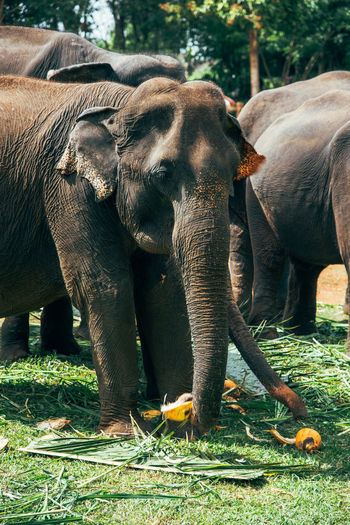Elephant Animals In The Wild Mammal Animal Wildlife Safari Animals Animal Themes Outdoors No People Animal Trunk Day Nature African Elephant SriLanka Srilankan Sri Lanka 🇱🇰 Sri Lanka Srilanka Photography EyeEmNewHere