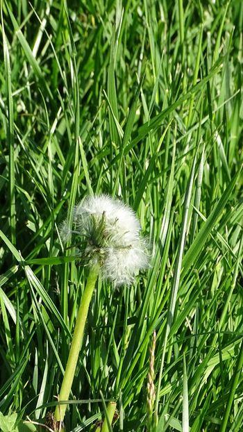 Flower Head Field Grass Plant Green Color