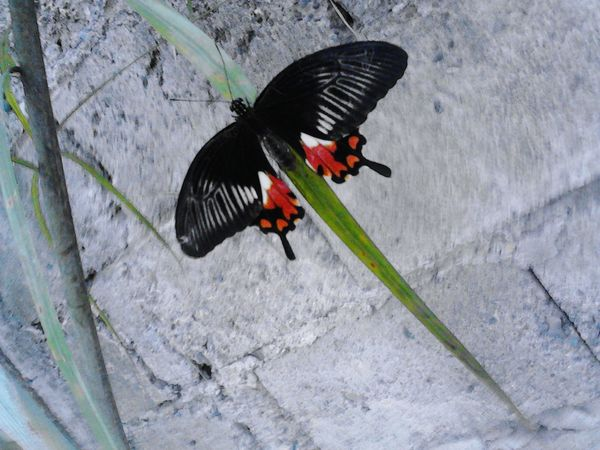 I was taking photos of the flowers in the garden , when i suddenly saw this Beautiful Creature. ( Butterfly ❤ )