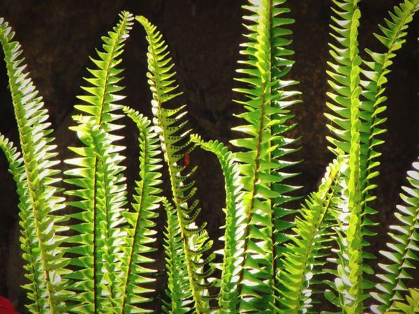 Helechos Getting Inspired Green Verde Canonsx510 Plantas Plantas Y Hojas Plants