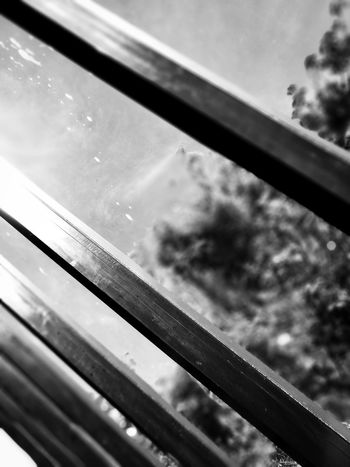 Steel bars on the windows. (Barras de acero en las ventanas.) Metal Close-up Institute Black & White Windows Wellington  Sunny Day Acero De Cerca Instituto Blanco Y Negro Ventanas Nueva Zelanda Día Soleado The City Light Welcome To Black The Secret Spaces Rethink Things