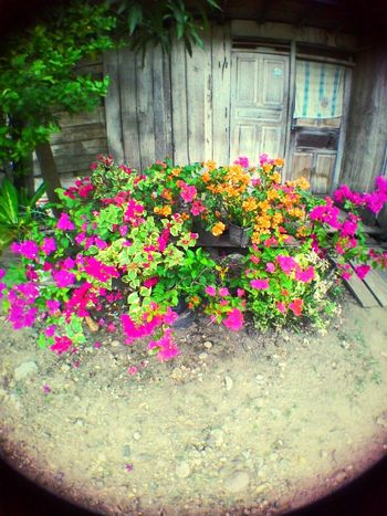 Taking Photos Flowers Vintage Vintage Photo Colorful Vignette Fisheye EyeEm Nature Lover Beautiful Nature
