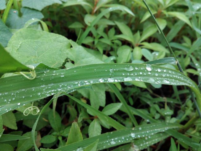 Beauty of nature Random click after rainfall