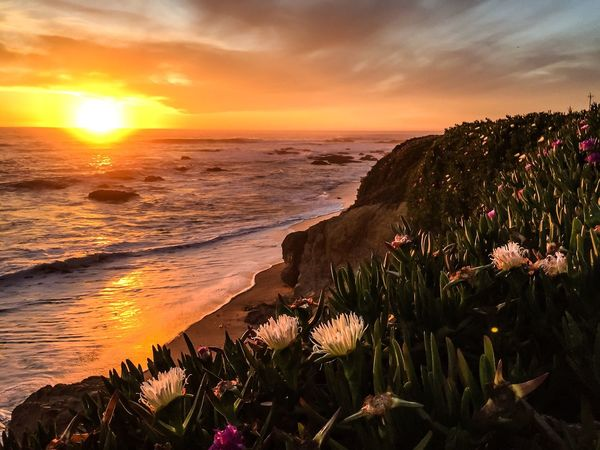 Ice Plants in the Sunset Pescadero Sunset Sunset_collection Flowers ICE PLANT Fig HDR Pigeon Point  The Great Outdoors - 2016 EyeEm Awards