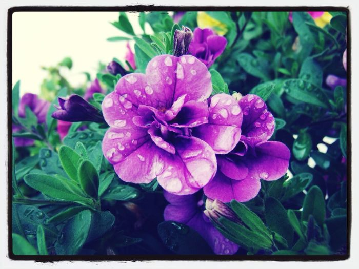 Flowers Favorite Art Your Art Is Portable With Caseable Rainy Days