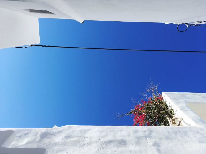 Blue Day Outdoors No People Nature Sunlight Clear Sky Winter Built Structure Building Exterior Flower Tree Snow Whitewashed Architecture Sky Paros Greece Blue Sky