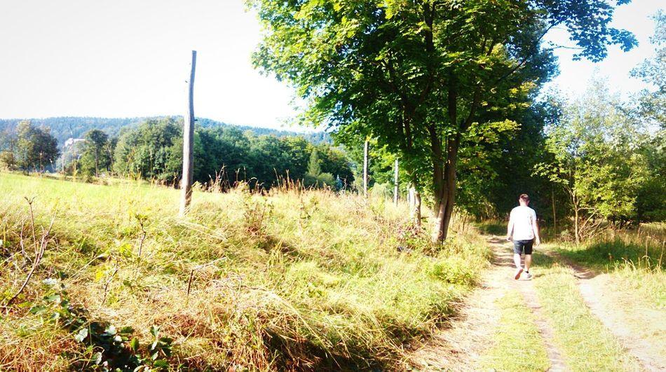 Holidays Szklarska Poręba Walking Tree Nature One Person Grass Forest Sunny Day