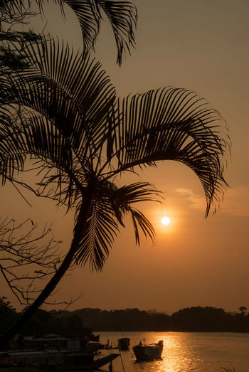 Huong River Huế Tranquility Beauty In Nature Coconut Palm Tree Nature No People Orange Color Outdoors Palm Leaf Palm Tree Plant Scenics - Nature Sea Silhouette Sky Sun Sunset Tranquil Scene Tranquility Tree Tropical Climate Water