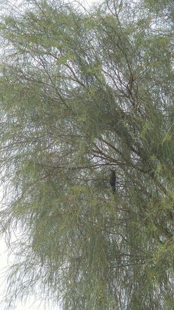 Bird In Tree Blackberry Blackbird In Tree Branch Grass Green Color Low Angle View Nature No People Tree