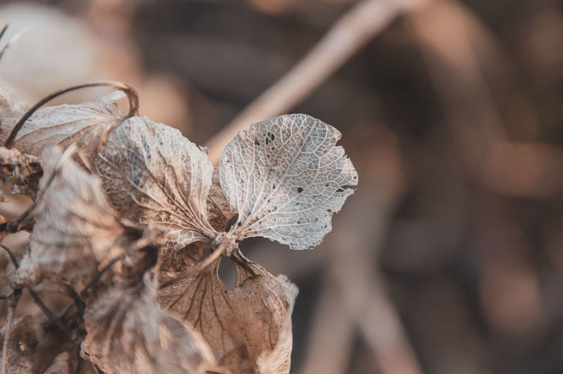 Close-up of dried plant