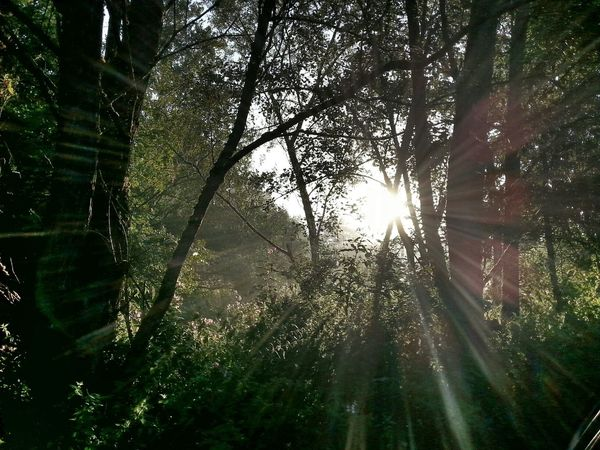 Good Morning Forest Outdoor Nature